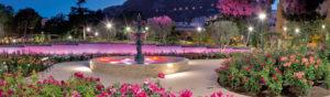 The roses of Monaco